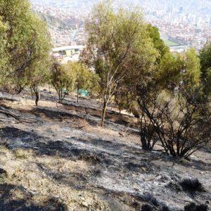 huerto lp quemado 30 oct